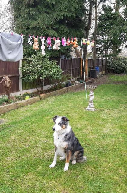 cachorro-fica-de-guarda-no-quintal-4