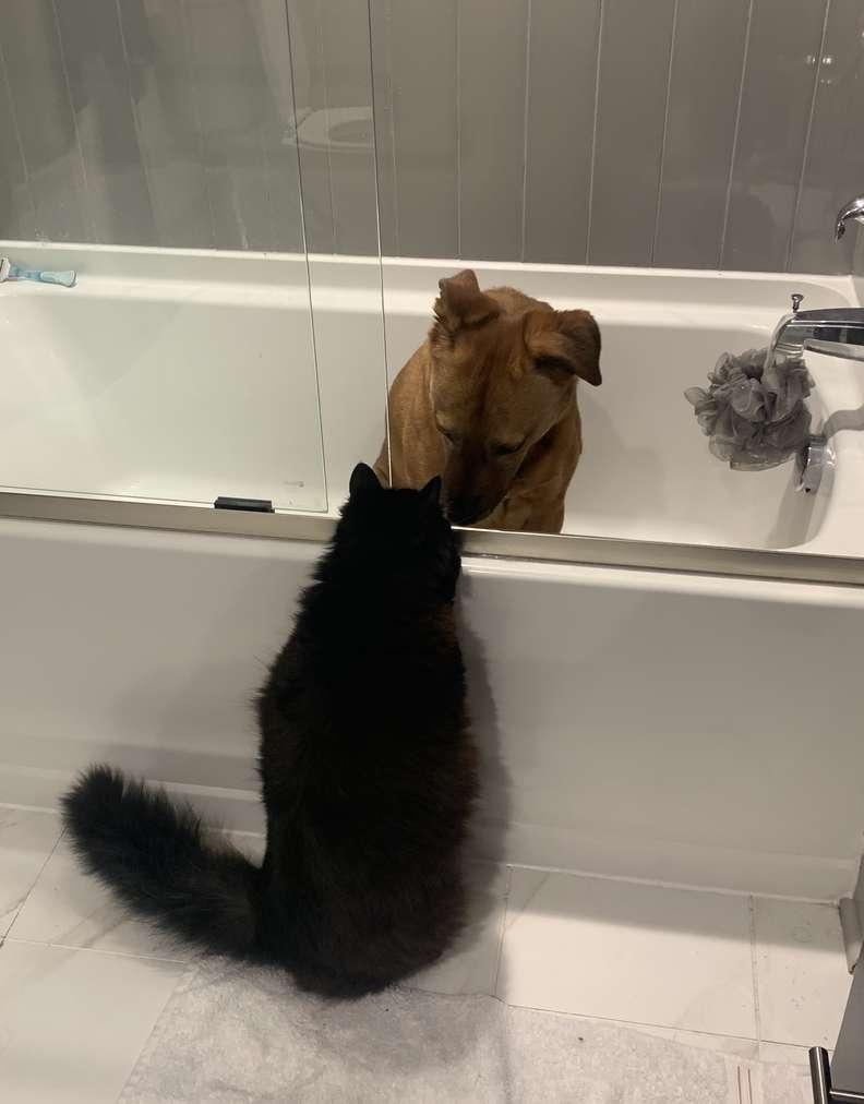 Gatinho conforta sua irmã Canina durante tempestades