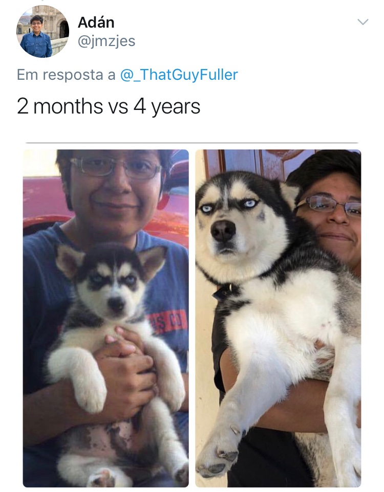 Cao-Antes-Depois-Reproducao-Twitter-10