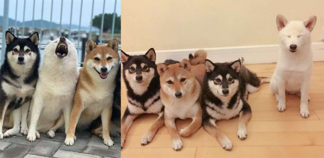 Em série de fotos adoráveis da família, cadelinha 'estraga' fotografias com seus irmãos