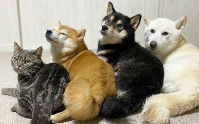 Conheça Kiki, o gatinho que se comporta como seus irmãos caninos