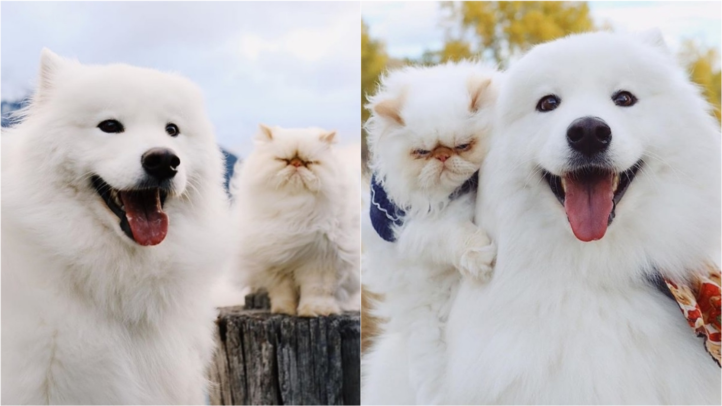 Relação entre cão sorridente e gatinho 'mal-humorado' diverte a web