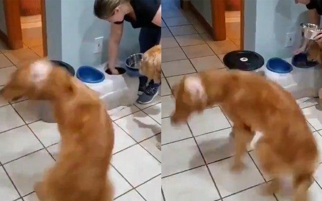 AnimaCÃO na hora da comida: Vídeo de cãozinho alegre para comer viraliza