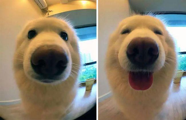 """10 Imagens de antes e depois de Pets ao serem chamados de """"bom garoto!"""""""