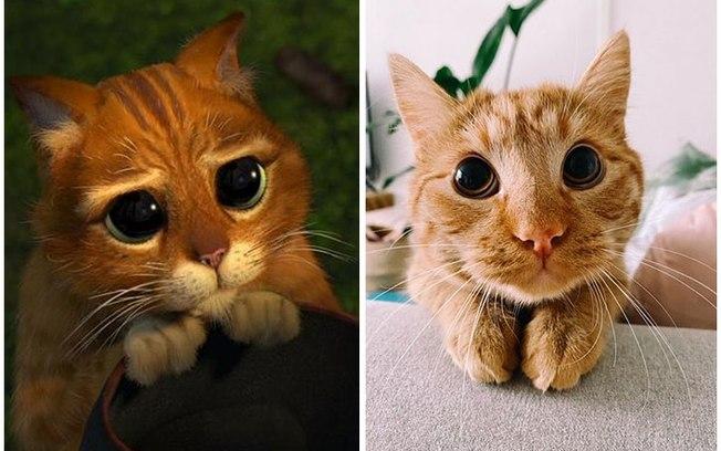 Felino viraliza ao imitar as expressões do Gato de Botas