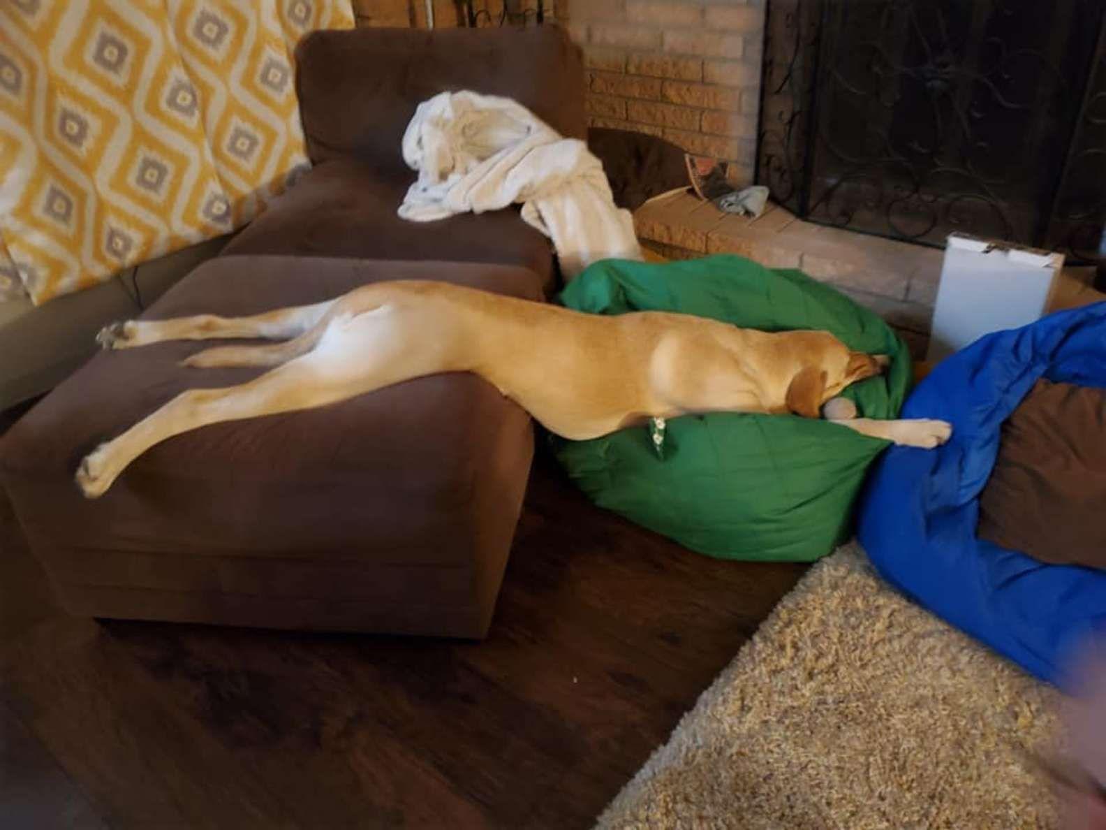 Cachorro sempre escolhe as posições mais estranhas para seus cochilos