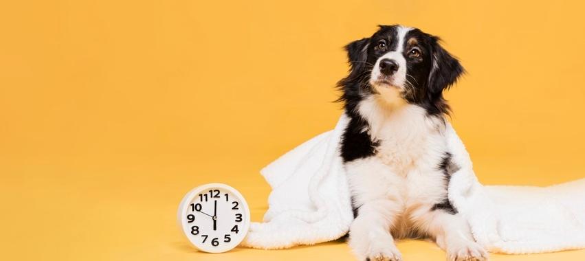 Curiosidade: Os cães sabem diferenciar as horas?