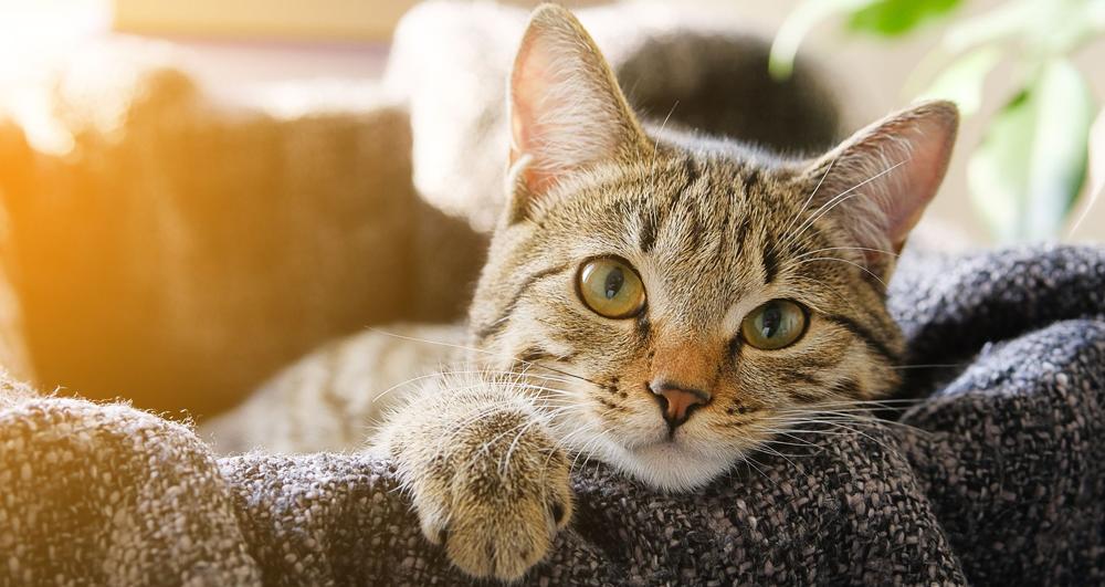 6 sinais que provam que seu gato te ama mais do que qualquer coisa
