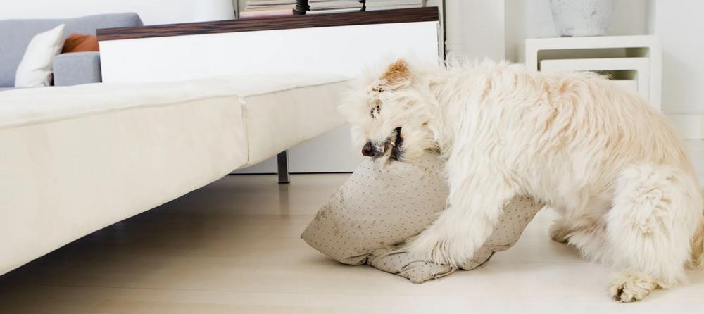 Comportamento canino: Mastigação