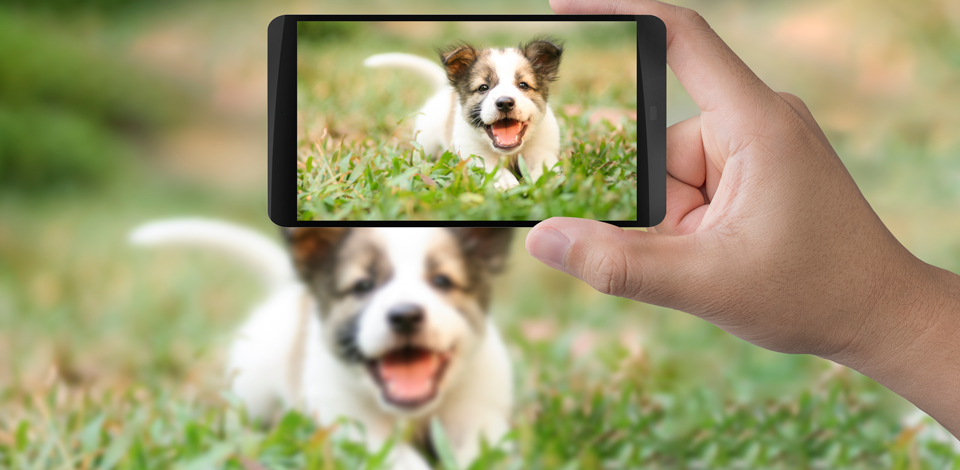 Dicas para fotografar seu pet