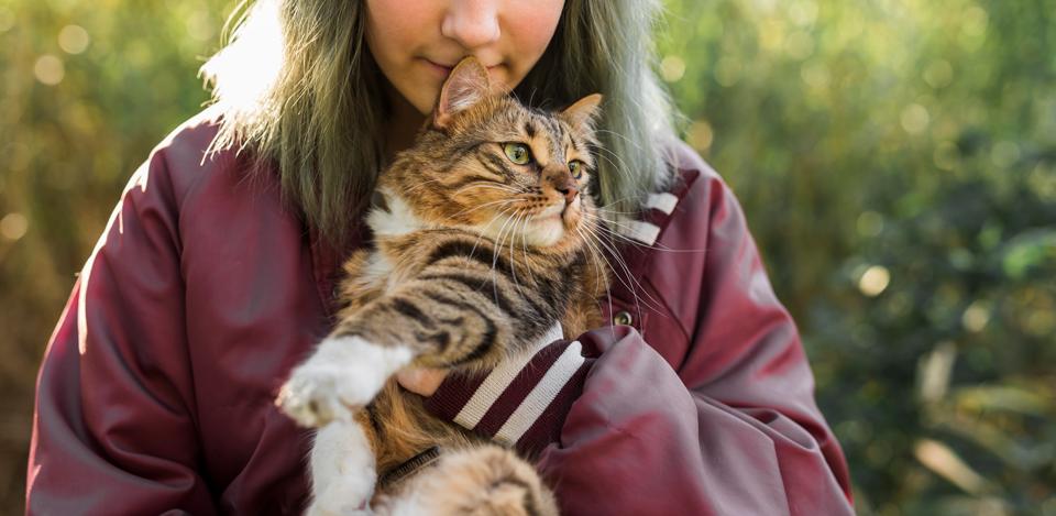 Estudo: Gatos são sensíveis às emoções de seus tutores