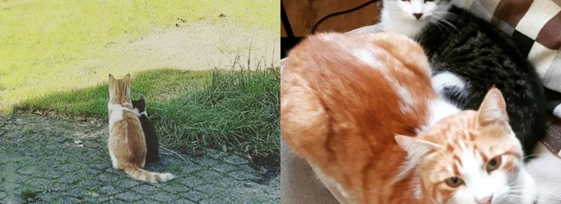 Gato faz amizade com felino perdido no quintal de sua casa e o convida para morar com ele
