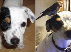 Cachorro salva passarinho que encontrou caído na rua e eles criam amizade incrível