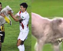 Cachorro invade partida de futebol, mastiga chuteira e é adotado por jogador
