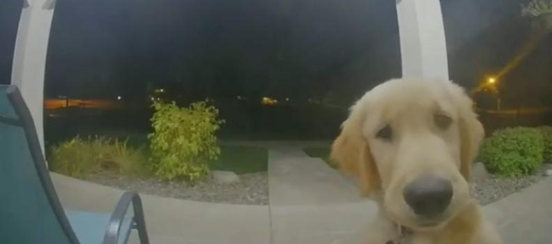 Fofura do Dia: Filhote de cachorro escapa de sua casa e depois toca a campainha para entrar