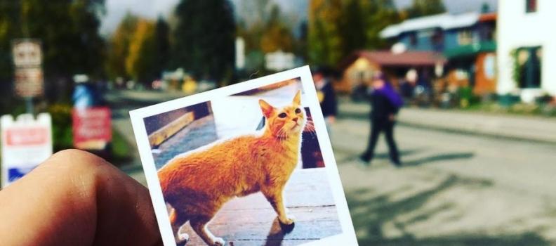 Existe uma cidade que teve um gato como prefeito por 20 anos