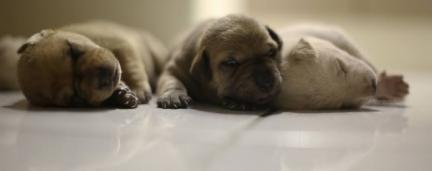 Cão adota cachorrinhos abandonados após perder filhotes