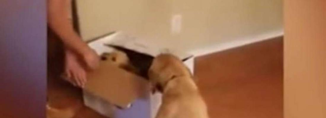 Cadelinha sofre com ansiedade, é presenteada com filhote e emociona a internet; assista
