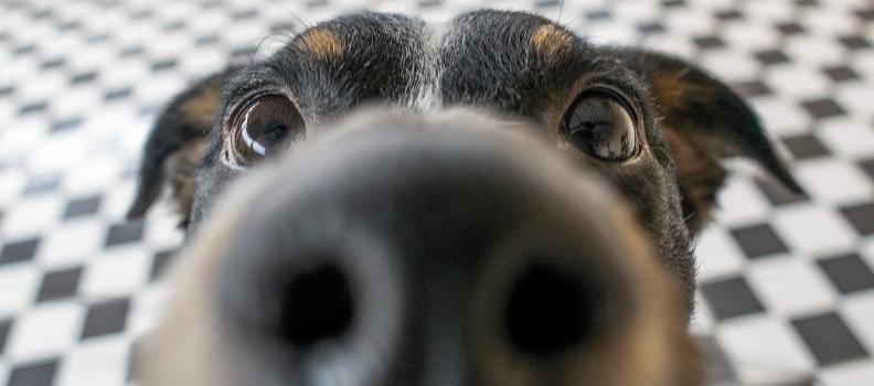 3 Odores que Cachorros não Gostam