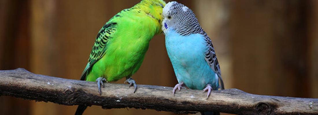 Nem todas as Aves são Pássaros, sabia?