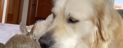 Vídeo: Filhotes de coelhos confundem cãozinho com mamãe coelho