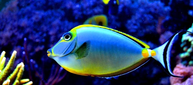 Como alimentar seu peixe corretamente