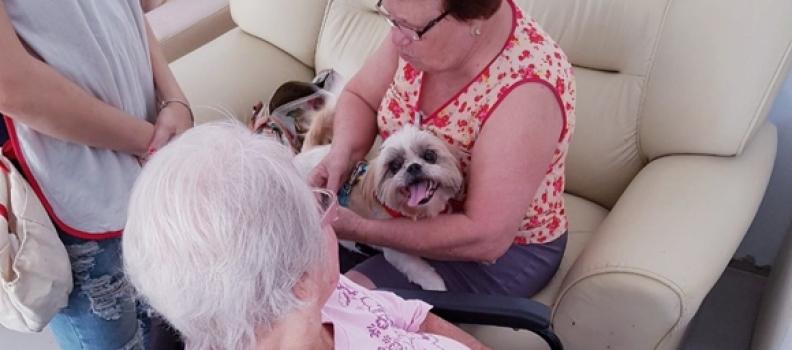 Cães visitam idosos em asilo de Santa Catarina