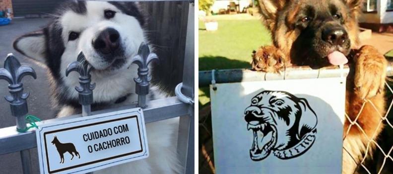 """""""cuidado com o cachorro"""": 15 cachorros super perigosos por trás de sinais"""