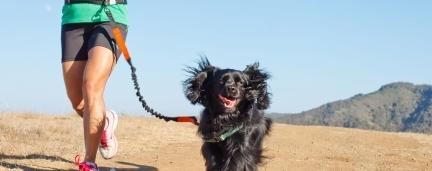 Como se Exercitar com ajuda do seu Cão