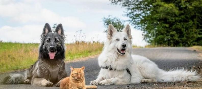 Conheça o Gatinho criado por 2 cães e que pensa que é um cachorro