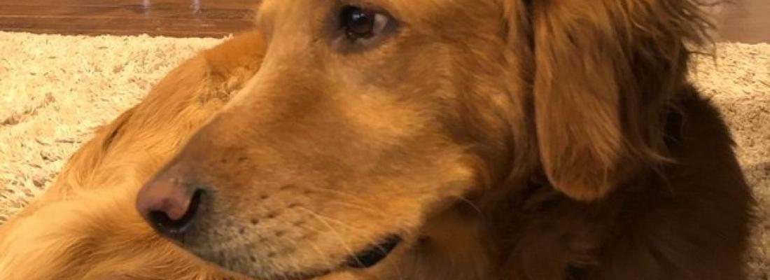 Cachorro corajoso alerta sua família sobre incêndio