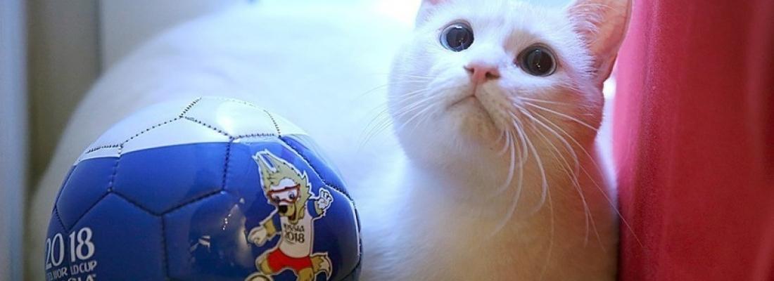Conheça Achilles, o gato vidente que tentará adivinhar resultados da Copa do Mundo