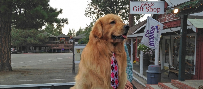 Cidade tem um Cachorro como prefeito e você pode solicitar uma reunião com ele