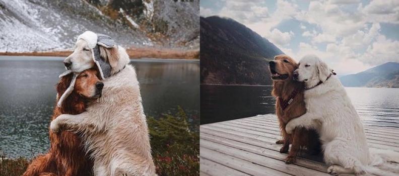 Ensaio fotográfico de cãezinhos abraçados é a fofura do dia!