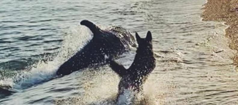 Fofura: Cãozinho brinca com golfinho em cena adorável na praia; veja