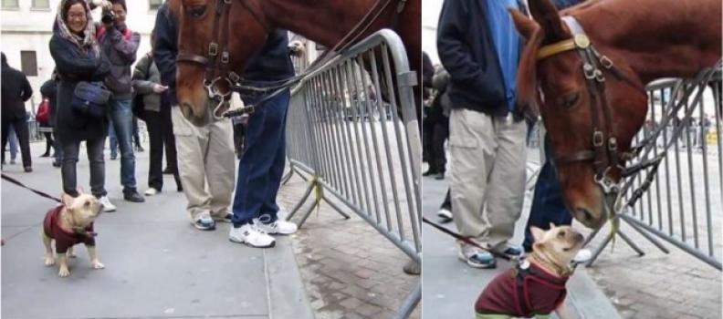 Amizade à primeira vista: Cãozinho fica encantado com cavalo e os dois viram amigos
