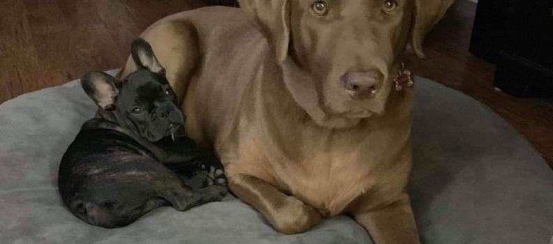 Cãozinho não esconde preocupação com amigo que foi ao veterinário
