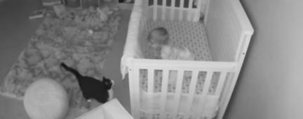 Câmera escondida flagra Gatinho fofo e Bebê conversando