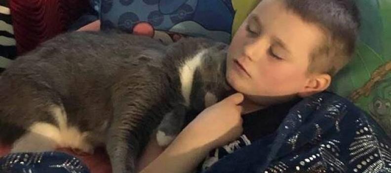 Gatinho doméstico ajuda menino durante crise de pânico