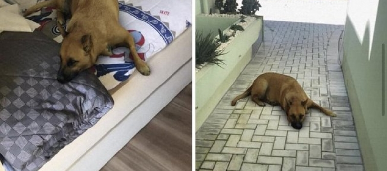 Filtro de cachorro no Instagram causa confusão na internet
