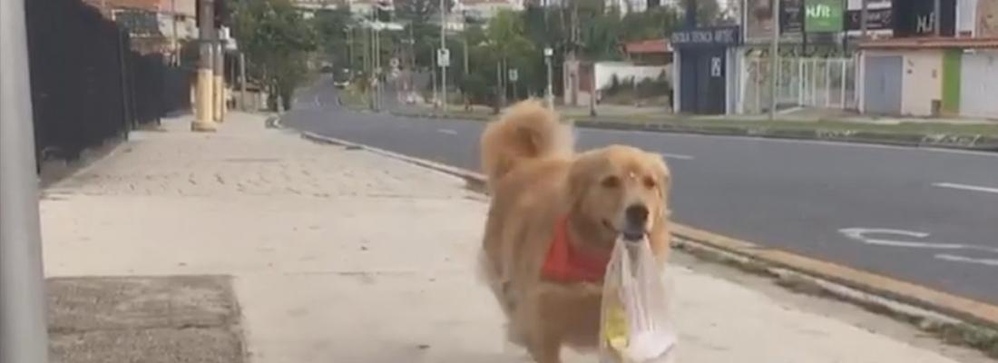 Vídeo de cadela buscando pão 'sozinha' na padaria viraliza na internet