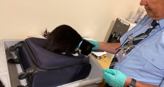 Homem descobre gato dentro de sua mala ao chegar em aeroporto