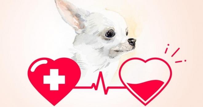 Cães e gatos também podem doar sangue