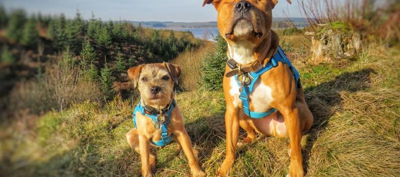 """Cãozinho cego é adotado e ganha """"cão-guia"""" que se recusa a sair do seu lado"""