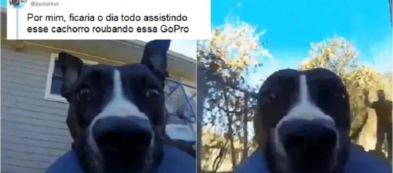 Cãozinho rouba GoPro e deixa a Internet louca com o vídeo que ele gravou