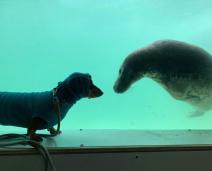 Cãozinho e Foca se conhecem em santuário e se tornam melhores amigos