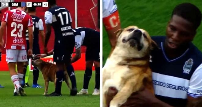 Cãozinho invade jogo de futebol e exige carinho dos jogadores
