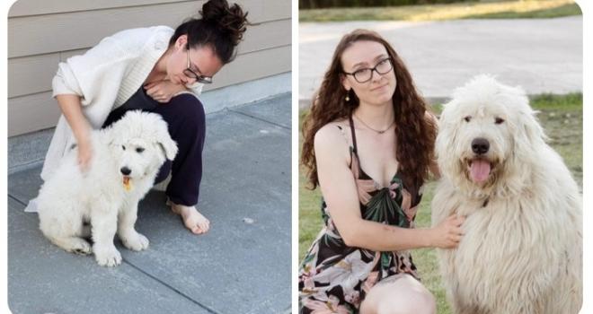 Antes e depois: tutores divertem a internet com fotos de seus peludos filhotes e como estão hoje