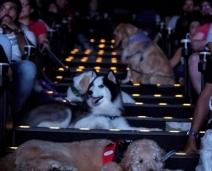 Cinema faz sessão para Cães assistirem filme com Tutores, em SP