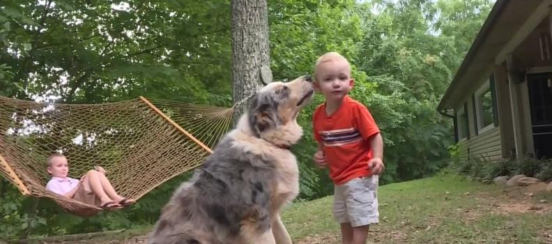 Cãozinho herói salva bebê e acaba sendo picado por cobra venenosa